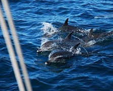 3 - Dolphins