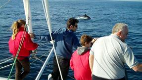 Catamaran boat ride san diego, Sunset Boat cruise in San Diego, private boat tour in san diego