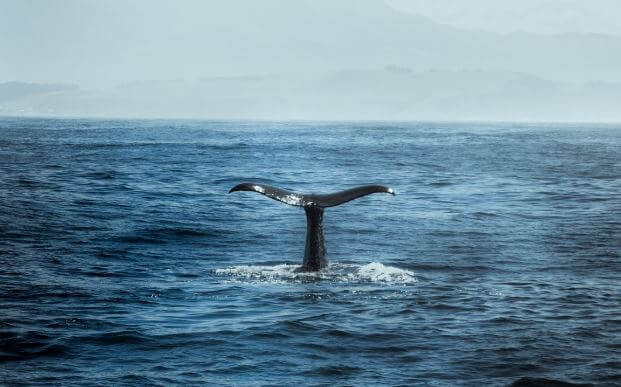 Whale Season San Diego